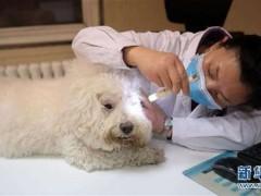 """看病动辄几千元,这些宠物医院为何能""""任性""""收费? - 社会 - 东"""